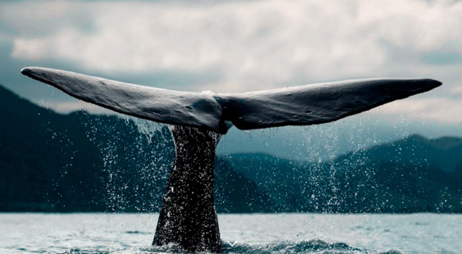 Conoce Sea Tex Tejidos a Base de Plástico Reciclado del Océano